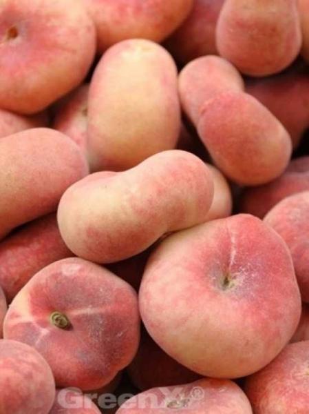 Prunus persica 'Saturn' / Prunus persica var. platycarpa / Pfirsich 'Saturn' / Teller-Pfirsich