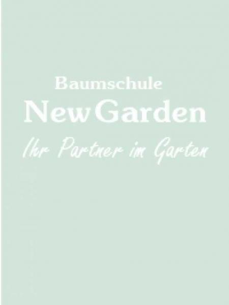 Pontederia azurea / Himmelblaues Hechtkraut