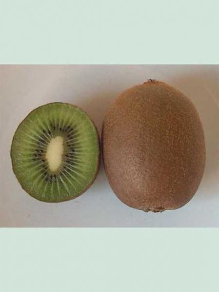 Actinidia deliciosa 'Alisson' / Kiwi 'Alisson'