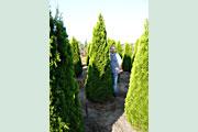 Smaragd_275-300cm_Solitaer