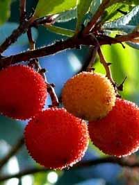 sonstige Früchte