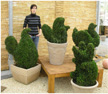 Buxus Tiere