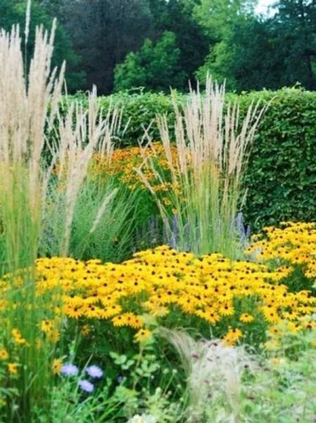 Calamagrostis x acutiflora 'Waldenbuch' / Garten-Reitgras 'Waldenbuch'