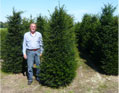taxus_baccata3_kl