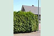 gelderland597b3eb3c4c5a